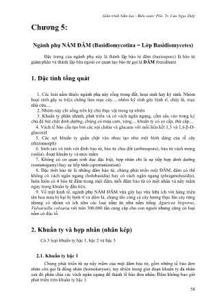Giáo trình Nấm học - Chương 5: Ngành phụ nấm đãm